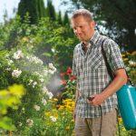 Piękny ogród. Jak o niego dbać?