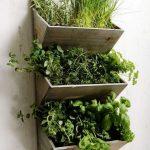 Naturalne i suszone zioła.  Sprawdź, ile mocy w nich drzemie!