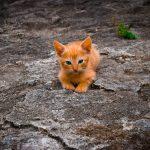 Sucha karma dla kota, czy jedzenie domowe?