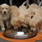 Czym karmić psa, czyli słów kilka o diecie pupila