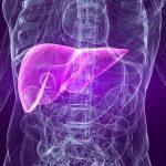 Fosfolipidy – pomoc dla wątroby