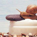 Krem ze śluzem ślimaka – dlaczego warto?